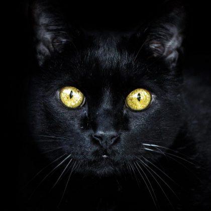 Wie sehen Tiere die Welt – Optiker Steiermark